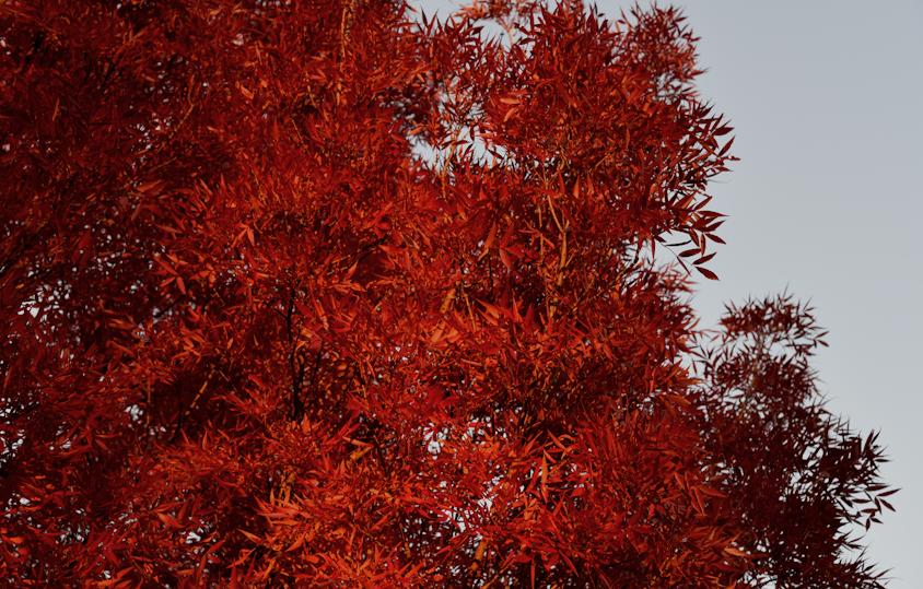 Farben zum wohnen – Warmes Rot